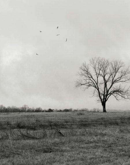 LAND. TREE. BIRD.
