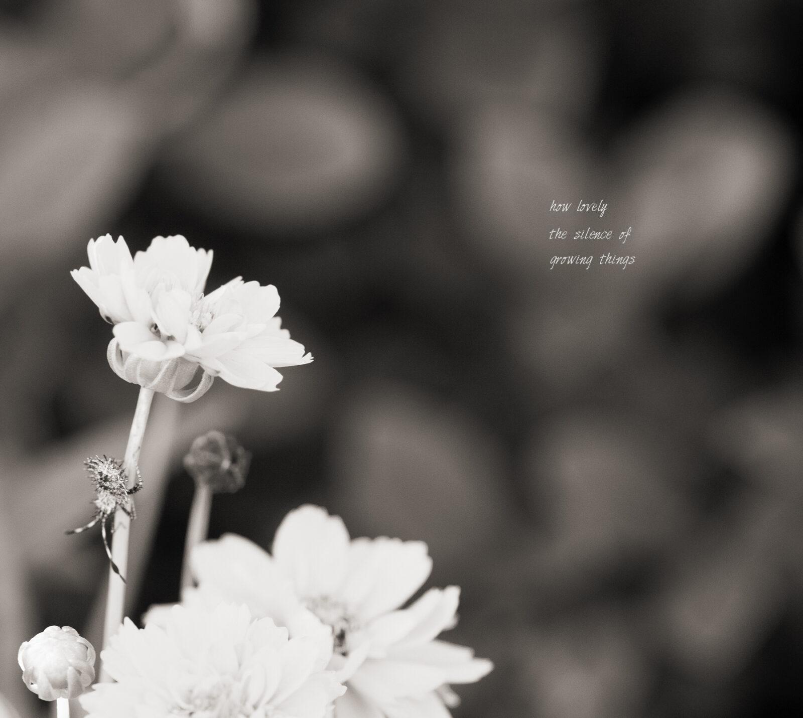 lovely silence