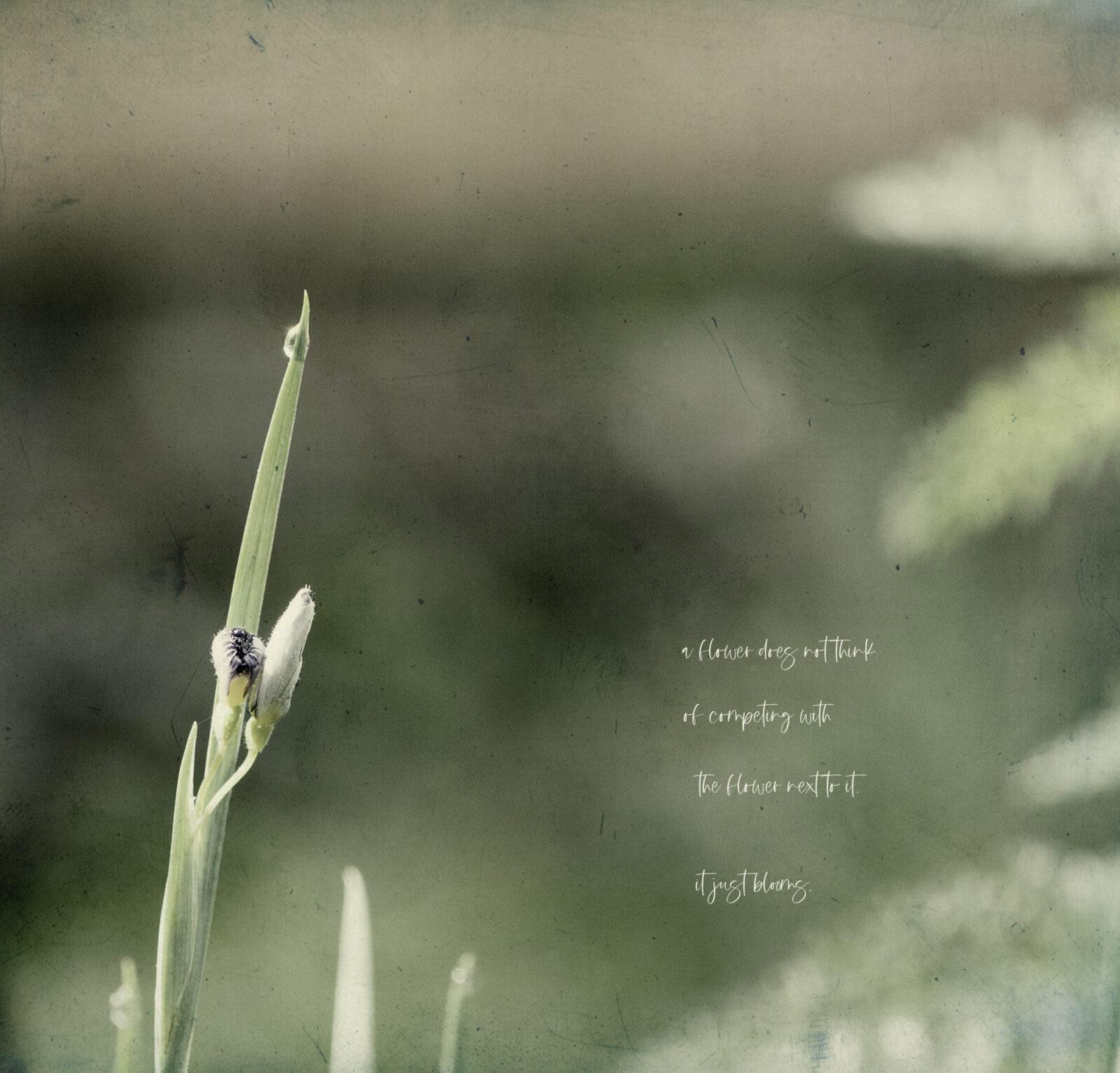 fleur(s).
